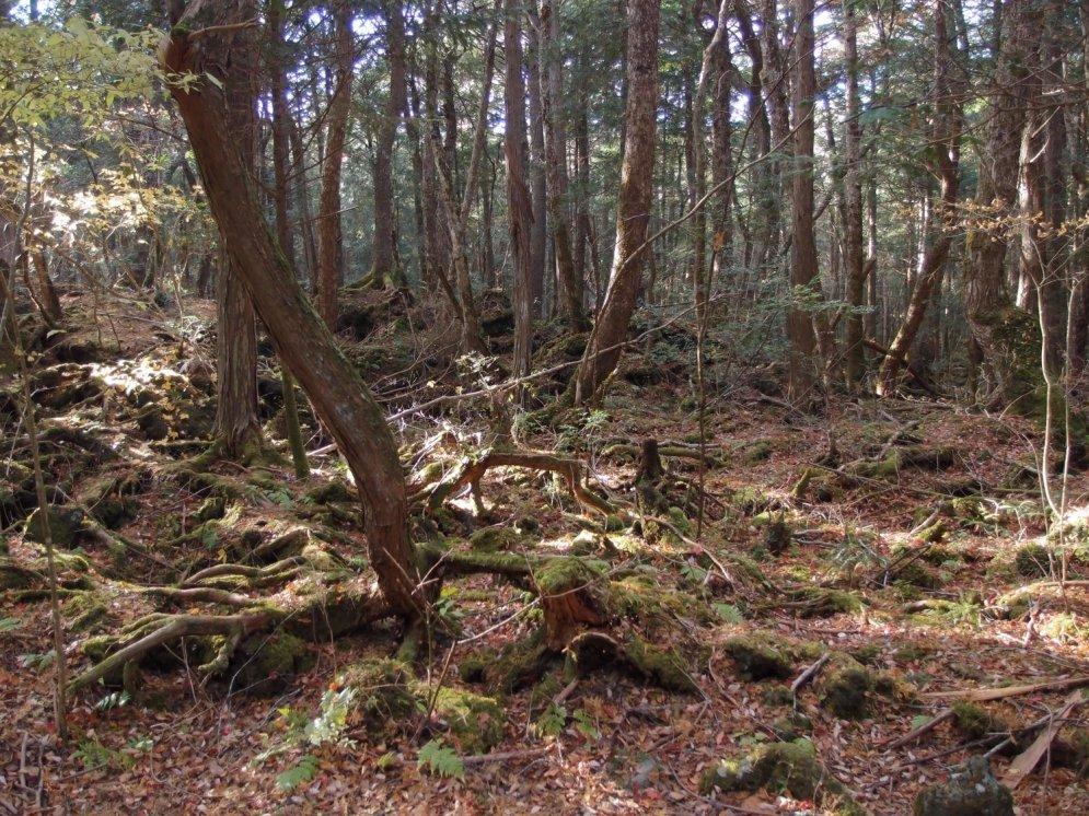 Pokaiņi un pieci citi maģiski meži no visas pasaules
