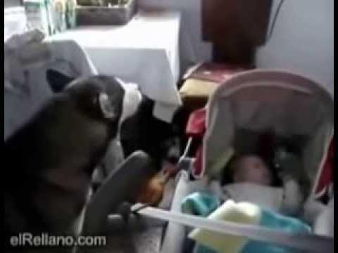 Suns dzied lai nomierinātu zīdaini...