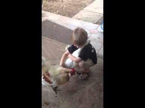 Vai tu savu vistu jau apskāvi?