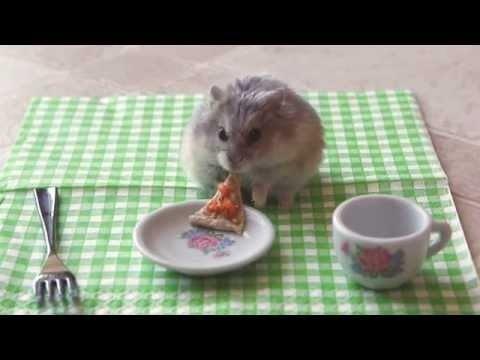 Ekonomiska maltīte