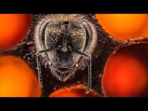 21 diena bites