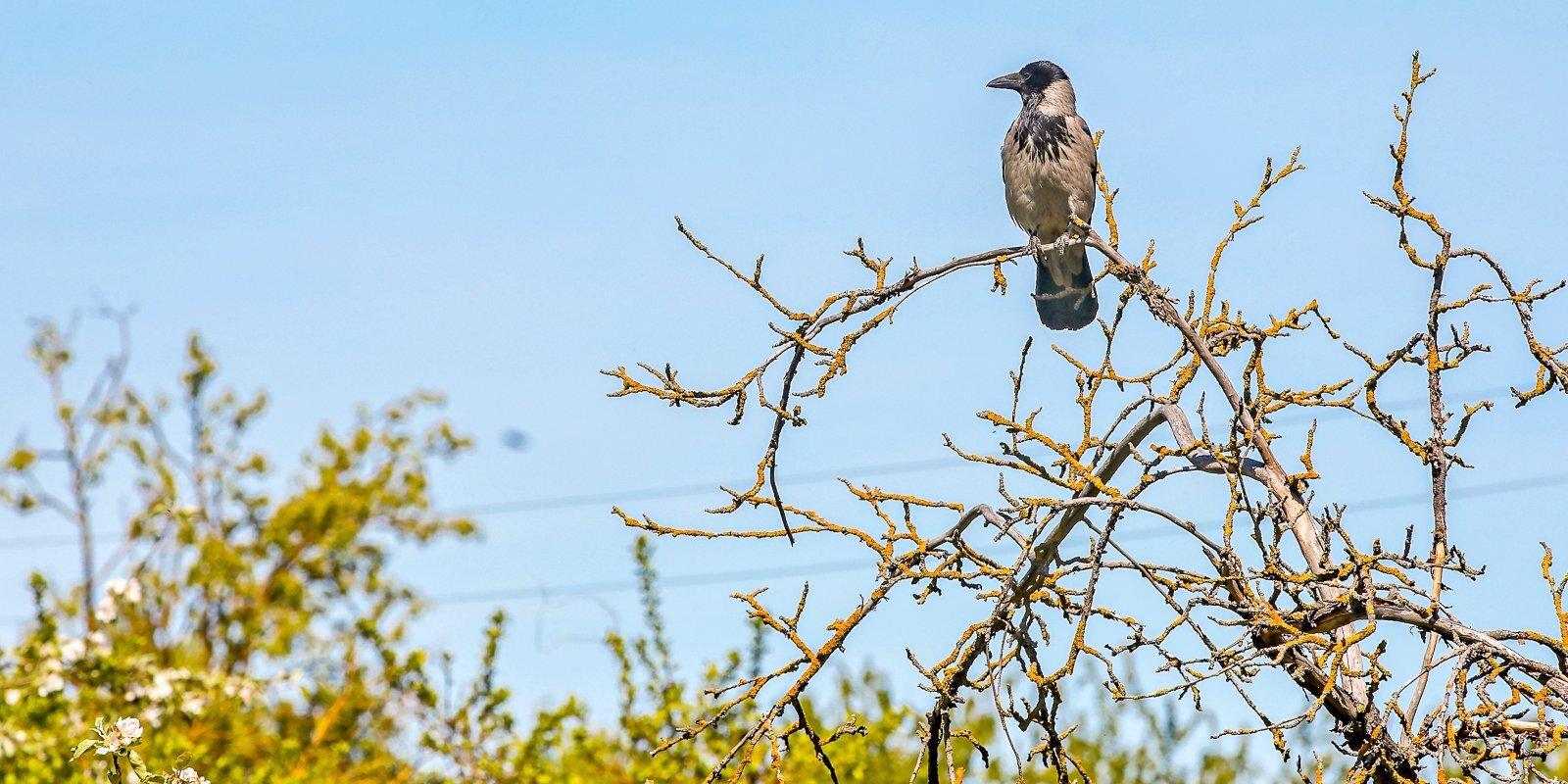 Skanstes mazdārziņu 'tīrīšana': darbi turpinās, pārliecība par putnu drošību – neviennozīmīga