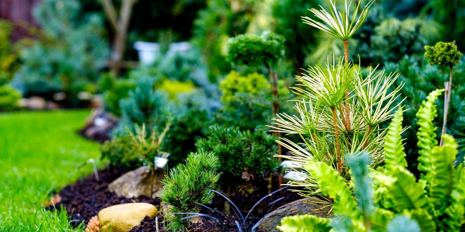 Ciemos Irēnas Rožkalnas skujeņu valstībā jeb dārzā, ko apbrīnot brauc no visas Eiropas
