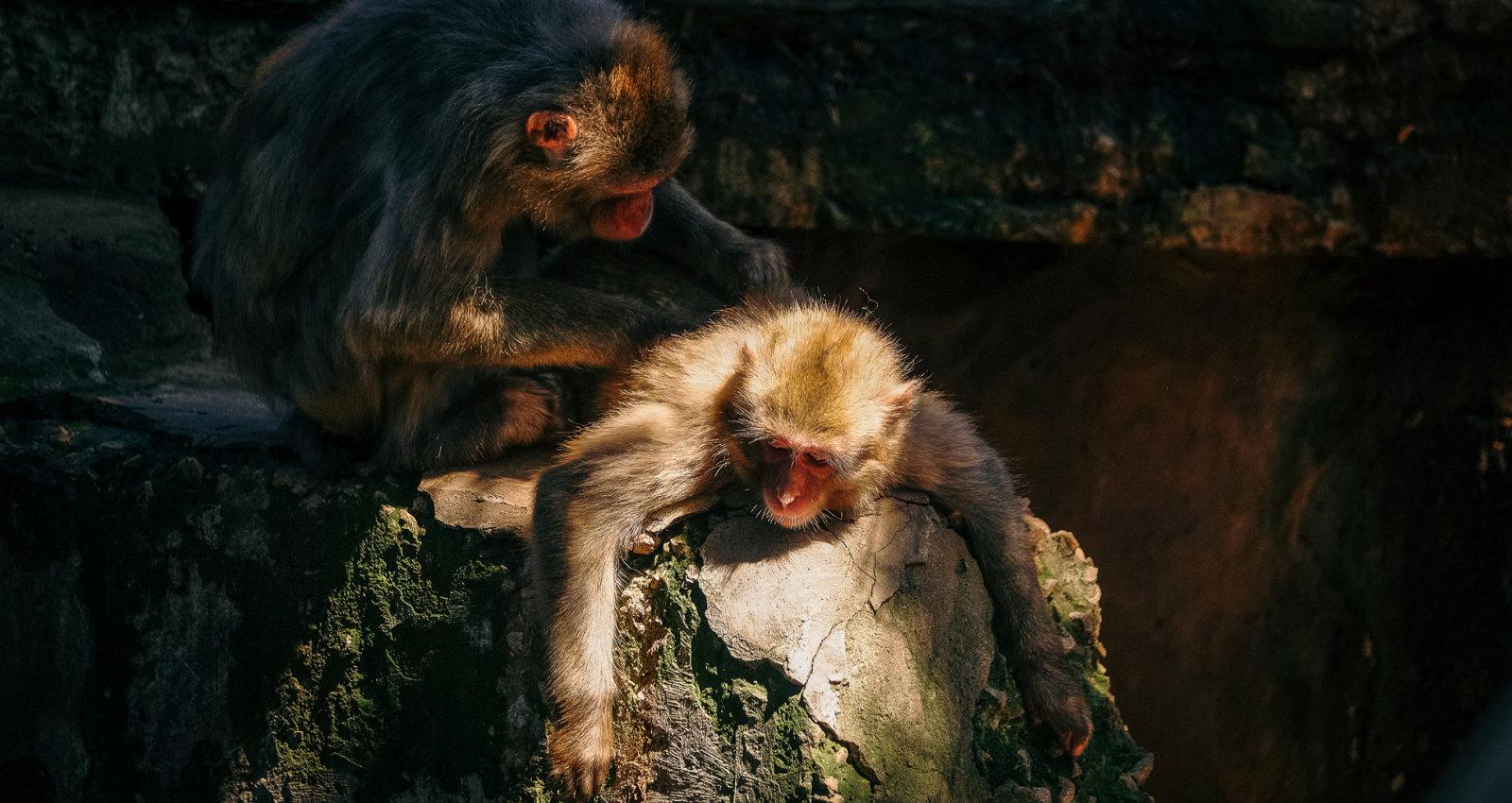 Zoodārzu raizes – dzīvnieku vienmuļais dzīvesveids un aptaukošanās
