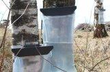 Atradumi vieglākai bērzu un kļavu sulu tecināšanai