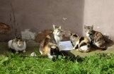 Ķekavas novads kļuvis par pionieri klaiņojošu kaķu aprūpē