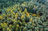 Исследование: иностранцы скупили землю в Латвии на территории в 11 раз больше Риги