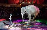 'Delfi Aculiecinieks' taujā: kā vērtē cirku bez dzīvniekiem?