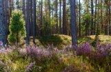 Dažos Latvijas novados gandrīz puse zemju jau pieder ārzemniekiem, vēsta LTV