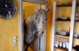 Foto: Vācijā sieviete dzīvo vienā istabā ar zirgu