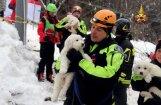 ФОТО, ВИДЕО: В Италии из накрытого лавиной отеля спасли трех щенков