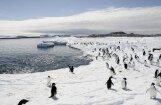 В NASA объяснили загадочное таяние льдов в Антарктике