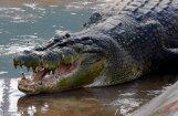 В Австралии крокодил утащил в море купающуюся женщину