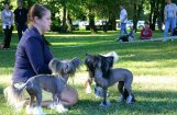 Fotoreportāža: Ventspilī dižojas vairāk nekā 500 šķirnes suņi
