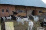 Lauksaimnieki šokā par augusta elektrības rēķiniem