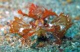 Пять подводных существ, которые могут сниматься в