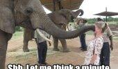 Ziloņi domā tā...