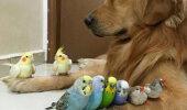 Retvīvers - putnu pavēlnieks