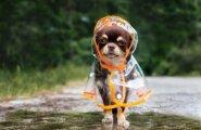 В субботу в Латвии местами пройдут небольшие дожди