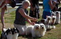 Foto: Vērienīga suņu izstāde Ādažos