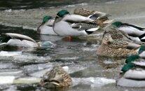 Вновь запрещено находиться на льду Рижских водоемов