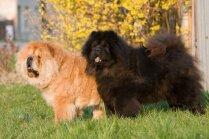Suns, kurš piepalīdzēja Freidam un divi citi stāsti par ievērojamiem četrkājainajiem draugiem