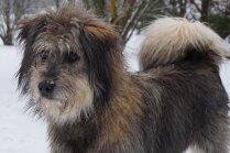 Saimnieku gaida vietējā 'Tīna Tērnere' – suņu meitene Fanta