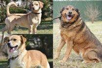 Mājas meklē dzīvespriecīgs 'lācis', lauku duksis un šunelis Dalī