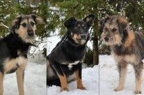 'Acīs lasāmas visas pasaules skumjas.' Mājas meklē trīs draiskulīgas suņu dāmas