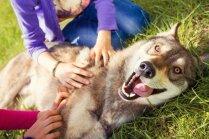 Viņi ir ļoti agresīvi un vēl seši mīti par lieliem suņiem