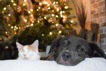 Labākās svētku dāvanas kaķiem un suņiem, kuras novērtēs katrs mīlulis
