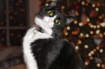 Pieci mājdzīvnieka tabu Ziemassvētku brīvdienu laikā
