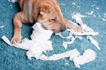 Kāpēc suņiem patīk rakņāties pa atkritumu tvertnēm