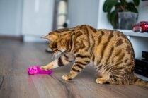 Vienkāršs veids, kā uzlabot mājas kaķa dzīvi