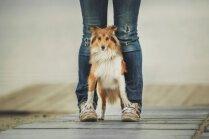 Kāpēc suns cenšas iespraukties starp saimnieka kājām