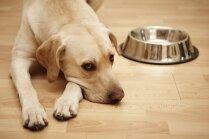 'Dogo' sāga: nāvējošās suņu slimības pētījuma pabeigšanai nepieciešami vairāk nekā 30 000 eiro