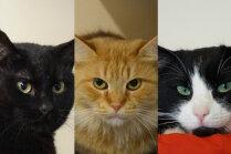 Meklē mājas: kaķenītes Fanija, Musja II un Rika, kura patversmē atgriezusies jau trīs reizes
