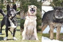 'Dalīja katram gribētājam' – mājas meklē trīs suņi, kurus savulaik pievīluši viņu saimnieki