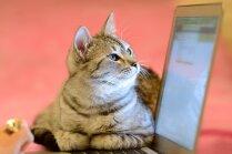 Kāpēc kaķiem patīk gulēt uz datora