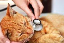 Vai mājdzīvnieki arī slimo ar gripu?