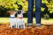 Bez izņēmumiem: pazīmes, kas liecina – esi atbildīgs suņa saimnieks
