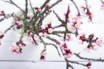 Labs nāk ar gaidīšanu – iedvesma zaru plaucēšanai mājās