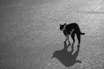 Mīts vai patiesība: kaķi dzīves beigās grib aiziet no mājām