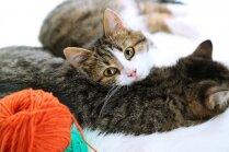 Kaķu kaķis vai mednieks? Noskaidro, kāds tips ir tavs mīlulis
