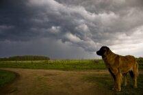 Mīts vai patiesība: dzīvnieki spēj sajust negaisa tuvošanos