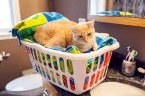 Astoņas kaķu saimniekiem pašsaprotamas darbības, kuras citiem iet secen