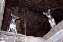 'Ārpus saprāta robežām': dzīvnieku glābēji no lauku mājas Liepājā izņem vairākus suņus un kaķus