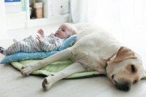 Kā laikus sagatavot mājdzīvnieku, ja ģimenē gaidāms bērniņš