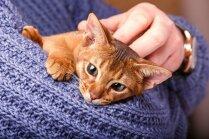 Piecas praktiskas darbības, kuras kaķis iemāca cilvēkam