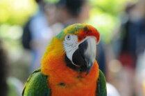 Ko darīt, ja papagailim ir pārāk garš knābis?